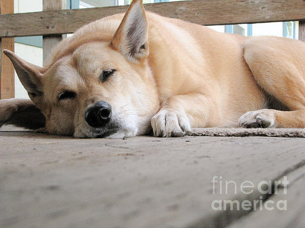 Lazin' On The Porch Print by Rory Sagner
