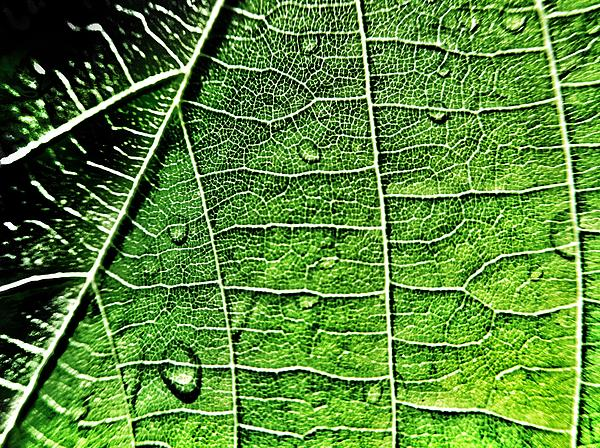 Leaf Abstract - Macro Photography Print by Marianna Mills