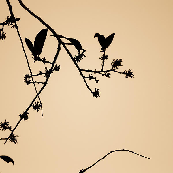 Leaf Birds Print by Darryl Dalton