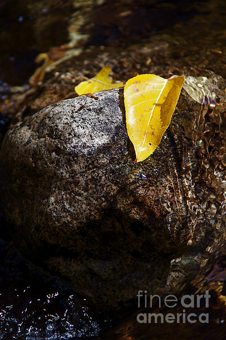 Leaf On Rock Print by ELITE IMAGE photography By Chad McDermott