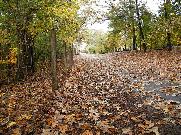 Cheryl Hardt Art - Leafy Path