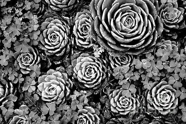 James Brunker - Leaves and Succulents