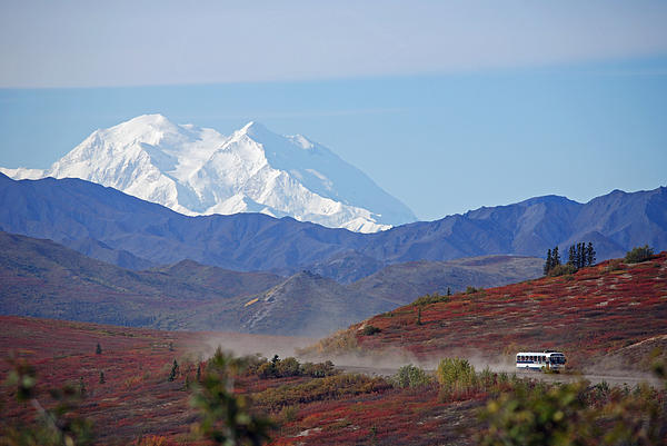 Leaving Denali Print by Jim Cook