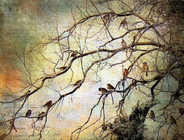 Les petits oiseaux by barbara chichester for Les petits oiseaux