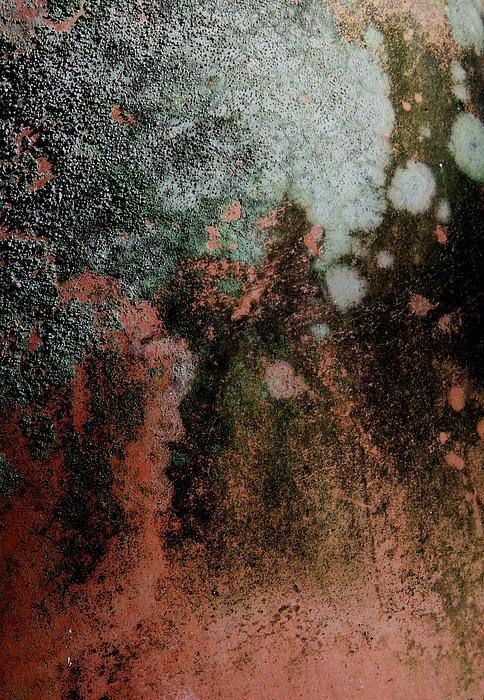 Lichen Abstract 2 Print by Denise Clark