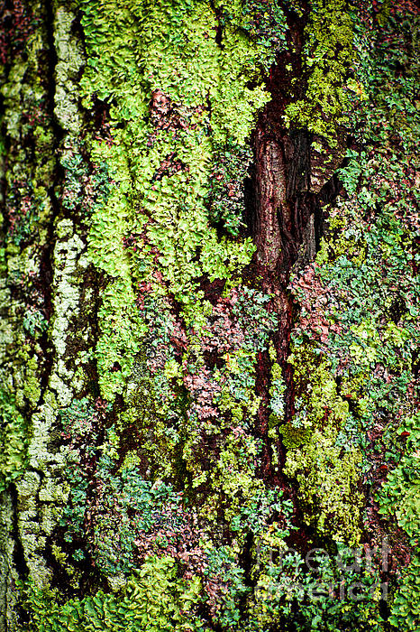 Lichen Print by Elena Elisseeva