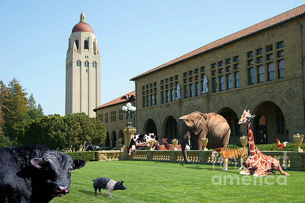 Life Down On The Farm Stanford University California Dsc685 Print by Wingsdomain Art and Photography