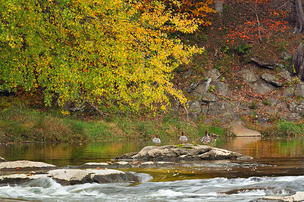 Life On The River Print by Bill  Wakeley