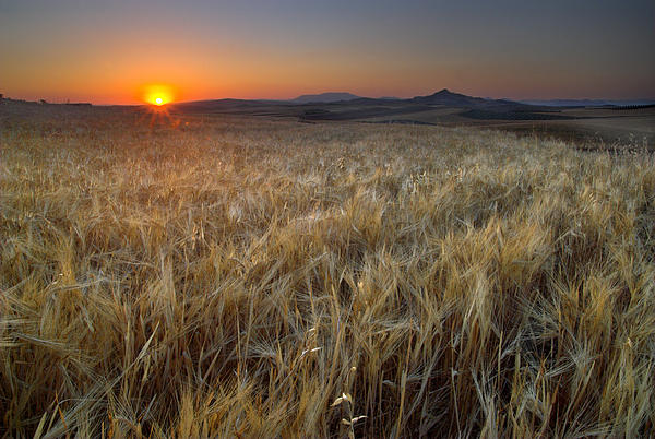 Light Fields Print by Guido Montanes Castillo