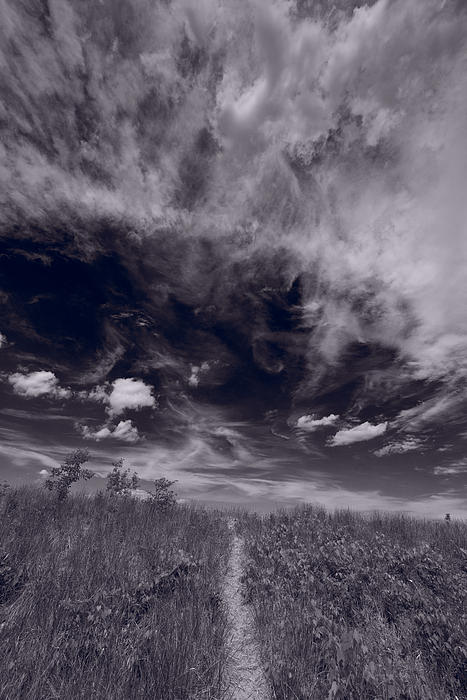 Lighthouse Beach Dunes Bw Print by Steve Gadomski