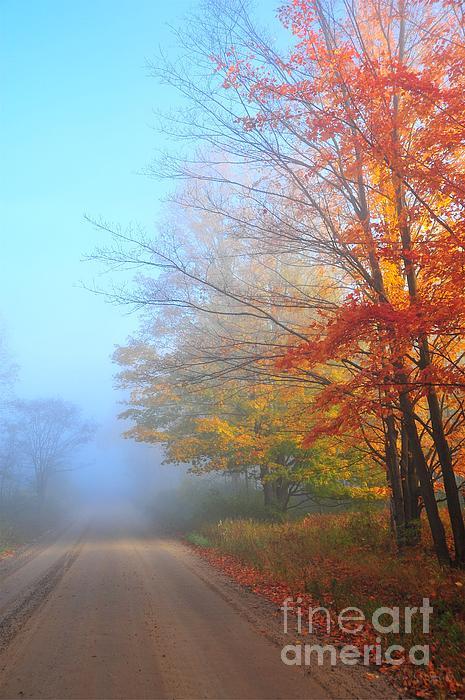 Lighting The Way In The Fog Print by Terri Gostola