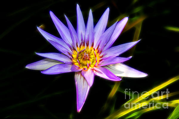 Lilac Lily Print by Mariola Bitner