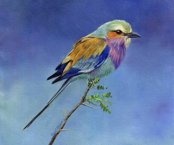 David Stribbling - Lilacbreasted Roller