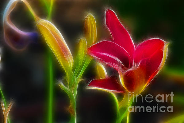 Lilies-6340-fractal Print by Gary Gingrich Galleries