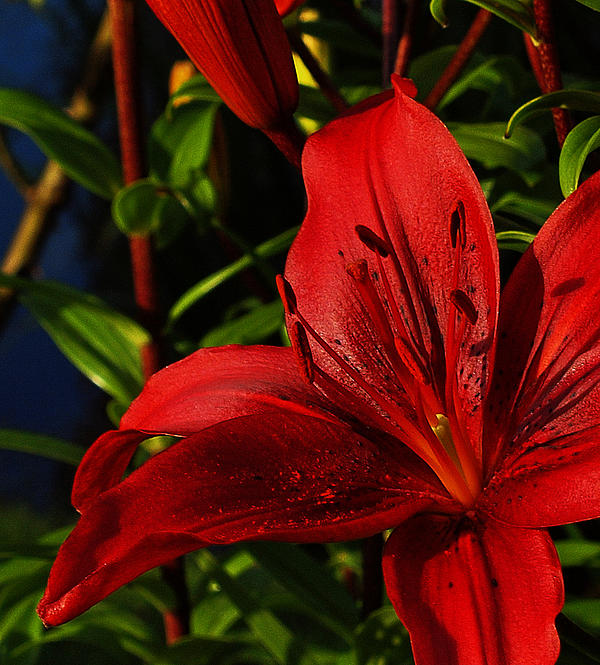 Lilies By The Water Print by Randy Hall