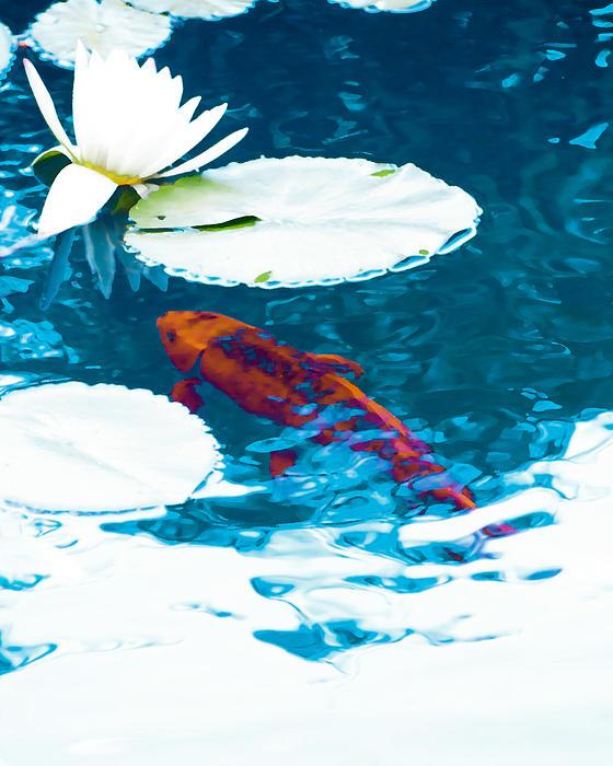 Lilly pond visitior by michael huddleston for Michael koi pond