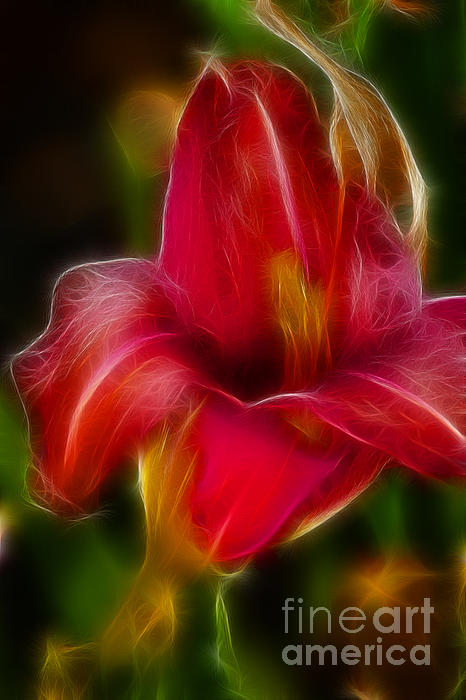 Lily 6081-fractal Print by Gary Gingrich Galleries