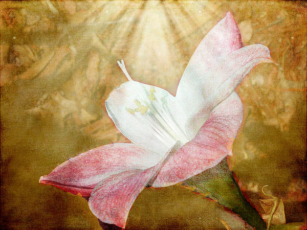 Judy Hall-Folde - Lily in Lenabem Lightwaves