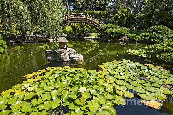 Jamie Pham - Lily Pad Garden - Japanese Garden at the Huntington Library.