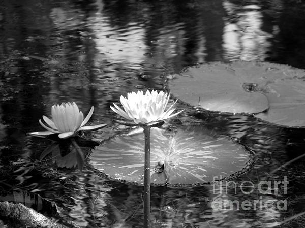 Lily Pond 2 Print by Anita Lewis