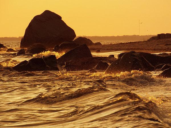 Dianne Cowen - Liquid Gold - Sunrise