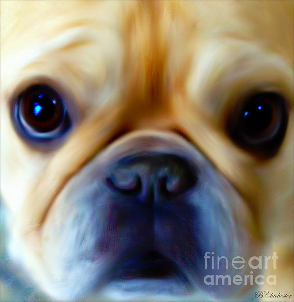 Little Frenchie Face Print by Barbara Chichester