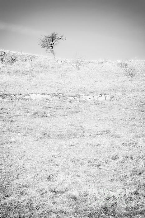 Little Tree On The Hill - Black And White Print by Natalie Kinnear