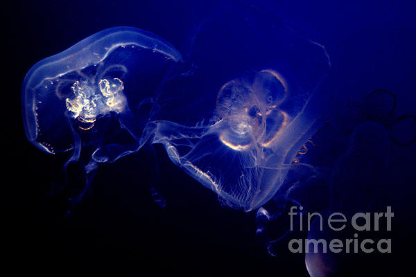Live Water Print by Paul W Faust -  Impressions of Light