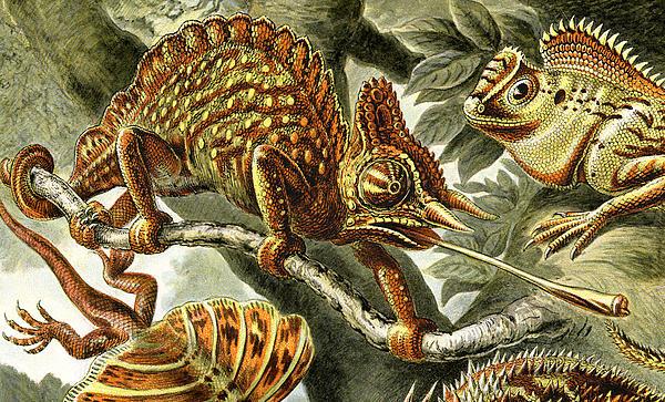 Lizard Detail I Print by Unknown