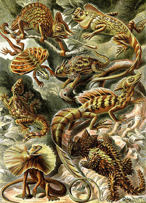 Lizards Lizards And More Lizards Print by Unknown