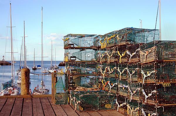 Lobstah Traps Print by Joann Vitali