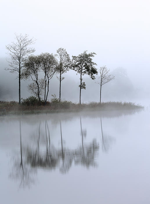 Loch Ard Trees In The Mist Print by Grant Glendinning