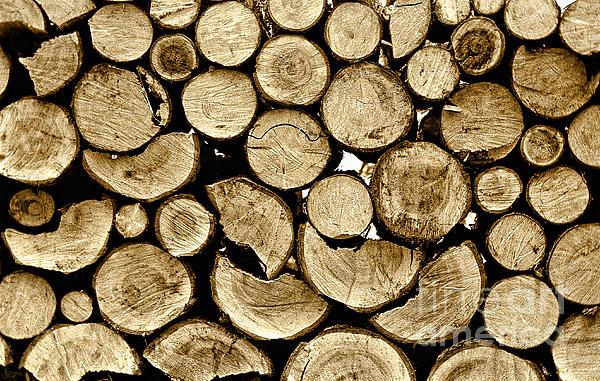 Logs Print by Jeff Breiman