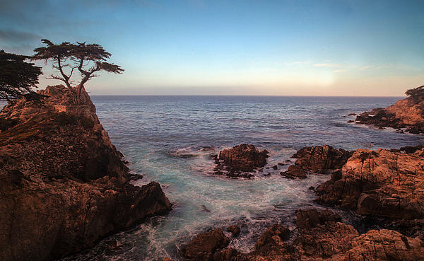 Lone Cyprus Pebble Beach Print by Mike Reid
