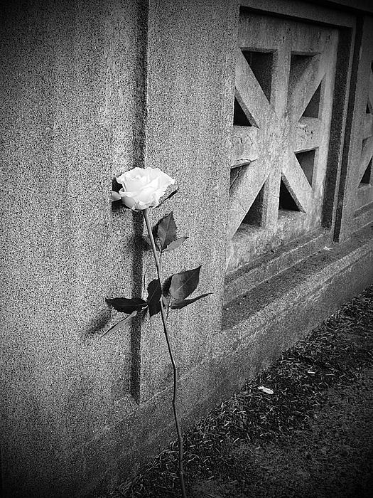 Lone Rose Print by HW Kateley