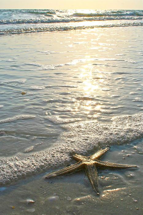 Lone Star On Lovers Key Beach Print by Olivia Novak