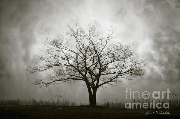Lone Tree And Clouds Print by David Gordon