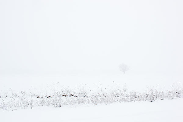 Lone Tree In Snow Print by Mary Bedy
