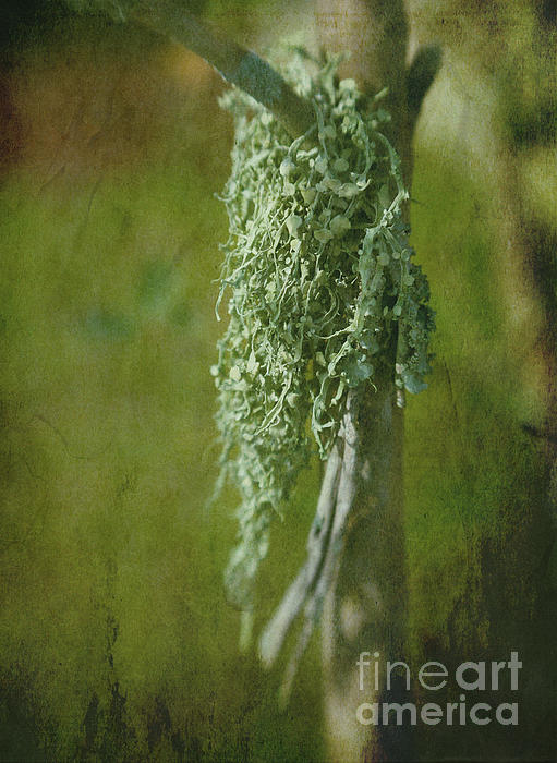Lonely Lichen Print by Judi Bagwell