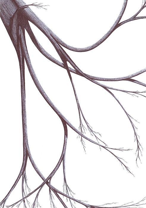 Long Branches Print by Giuseppe Epifani