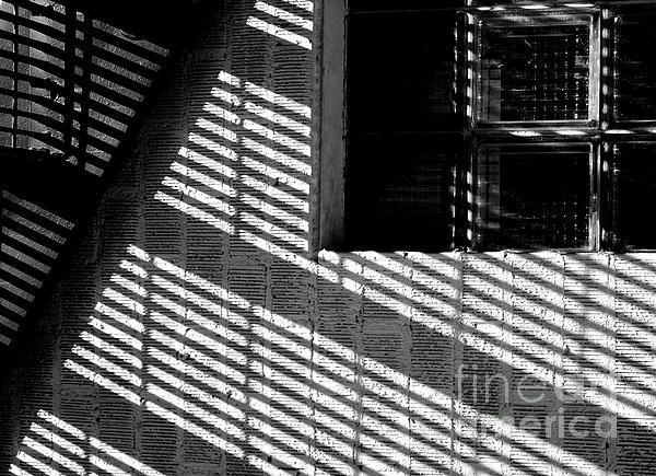 Long Shadows Print by Steven Milner