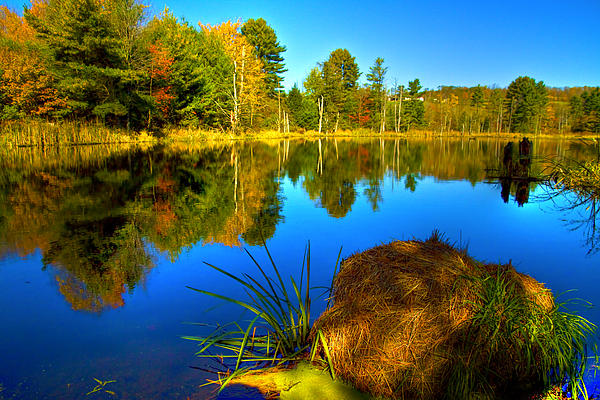 Looking Across The Pond Print by David Simons