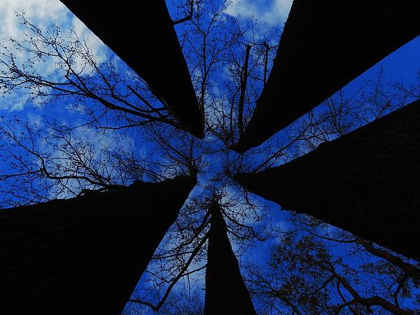 Looking Up Print by Raymond Salani III