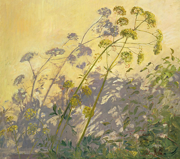 Lovage Clematis And Shadows Print by Timothy  Easton
