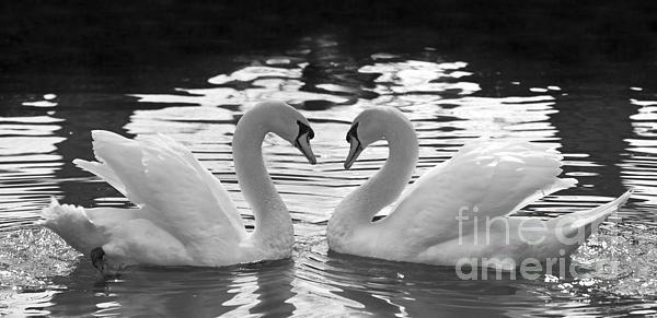 Love Swans Print by Brandon Alms