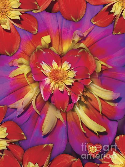 Loveflower Orangered Print by Alixandra Mullins