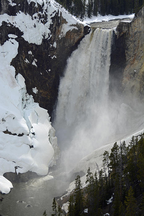 Lower Falls Of The Yellowstone In Spring Print by Bruce Gourley