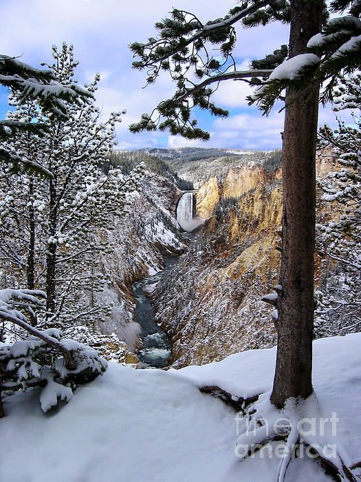 Lower Yellowstone Falls In October Print by Robert Woodward