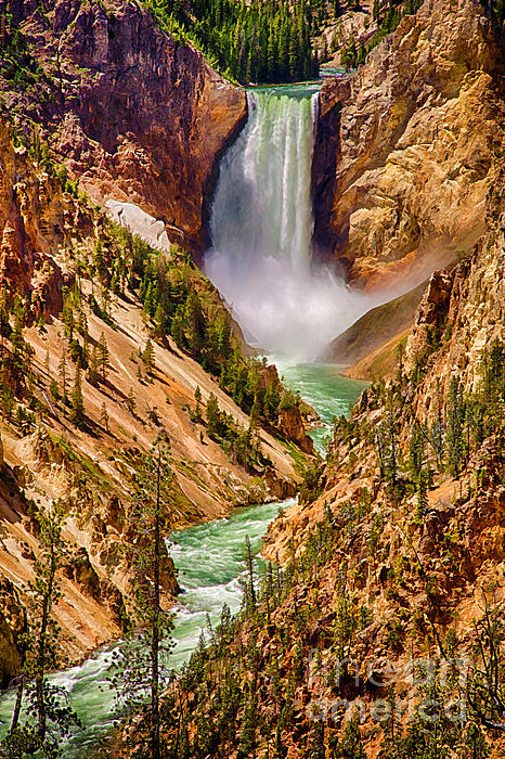 Priscilla Burgers - Lower Yellowstone Falls