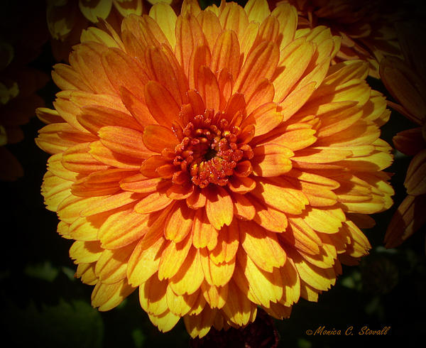 M Bright Orange Flowers Collection No. Bof8 Print by Monica C Stovall